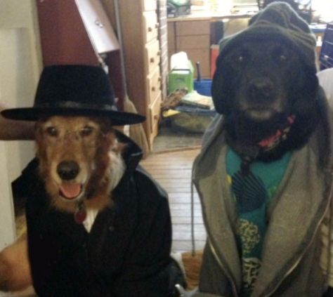 breakingbad-dogs