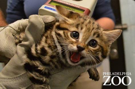 kitten-4