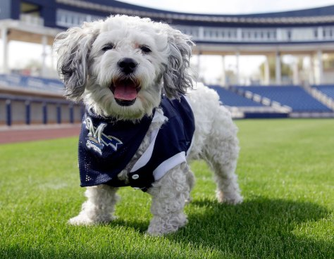 os-hank-the-ballpark-pup-milwaukee-brewers-20140316