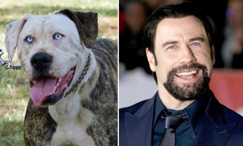 travolta-dog-header
